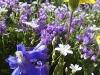 09alf-flower-garden-pasque
