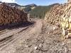 elbow-logging-summer2012-_0405