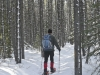elkwood-snowshoe-trails-80833