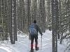elkwood-snowshoe-trails-80833