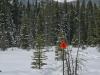 elkwood-snowshoe-trails-80845