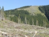 jumpingpound-logging-sep201210524