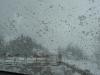 mclean-hill-snowshoe-4
