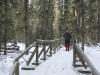 moose-pine-1