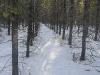 moose-pine-3