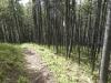 Trail Jct Burke trail