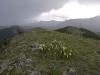8 Surveyor Ridge-30062