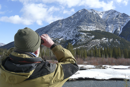 Eagle counting in Kananaskis Valley