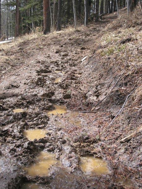 Equestrian damage to Braggin Rights trail