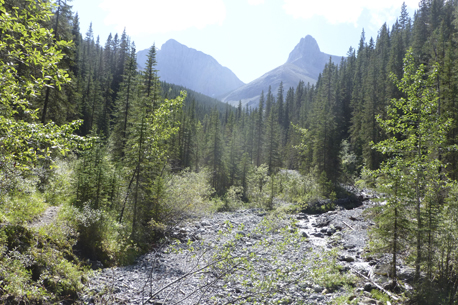 Stewart Creek-view