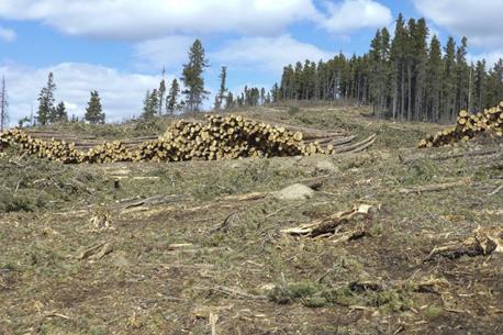 Boundary Ridge logging