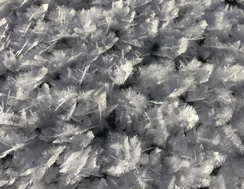 Surface hoar crystals