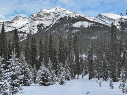 dog sled trail