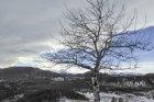 Wolf Creek snowshoe/hike