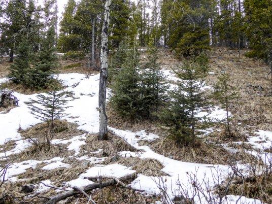 Coal Creek Ridge-30501