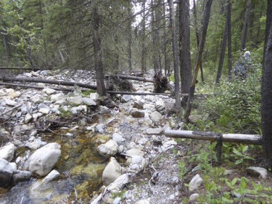 Old Baldy3-creek deadfall