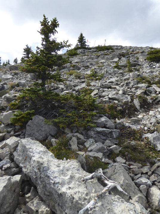 Rainy Summit Ridge-rocks