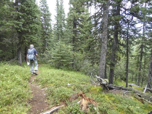 Rainy Summit Ridge-trail