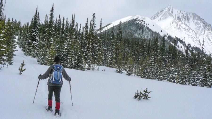 Sawmill Snowshoe Trails