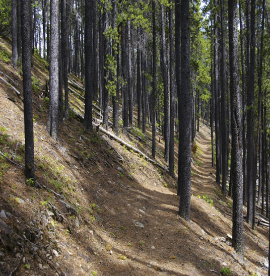North ridge of Cox Hill