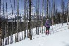 Why not Snowshoe the High Rockies Trail?