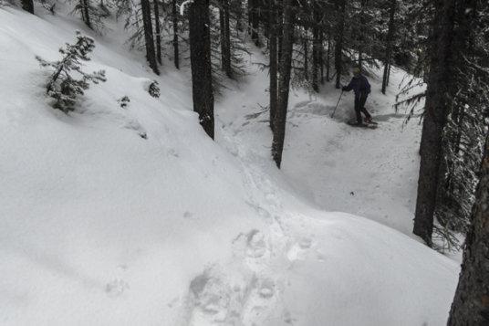 Buller to Engadine Snowshoe