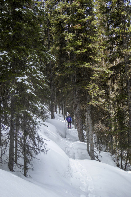 Buller to Engadine Snowshoe