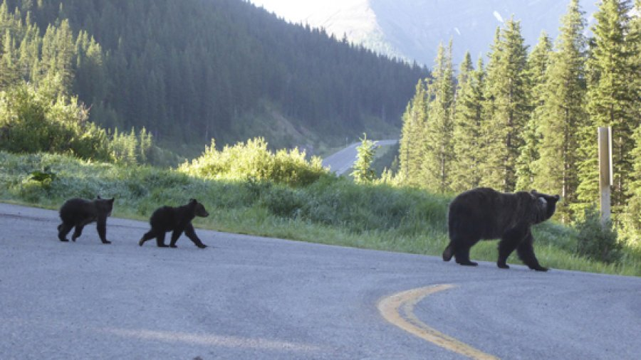 "We had ""bearly"" started backpacking when …"