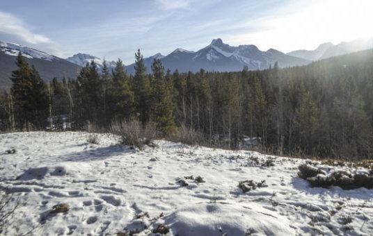There is a New Snowshoe Trail at Kananaskis Village Thumbnail
