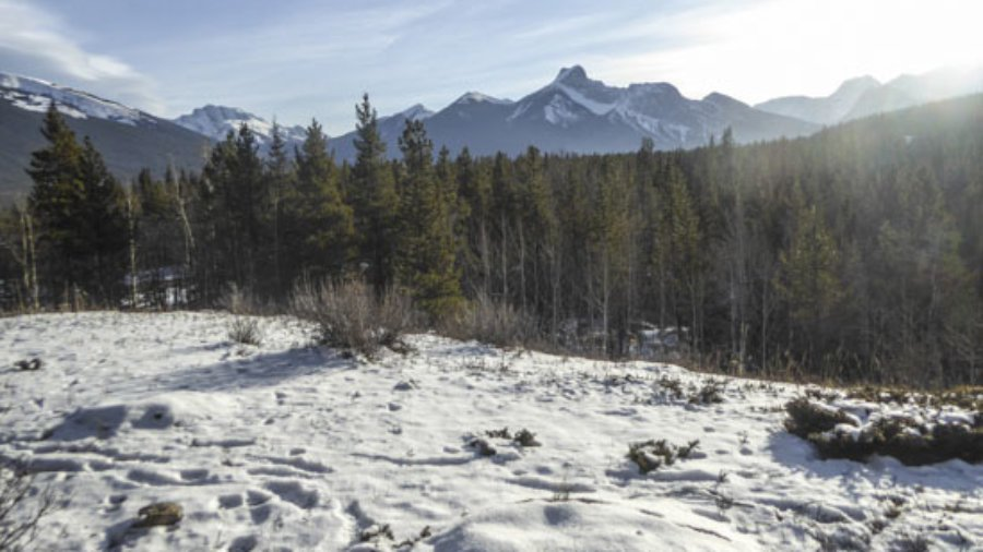 There is a New Snowshoe Trail at Kananaskis Village