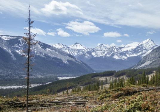 Mustang Hills after logging Thumbnail