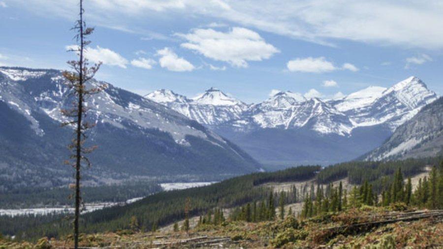 Mustang Hills after logging