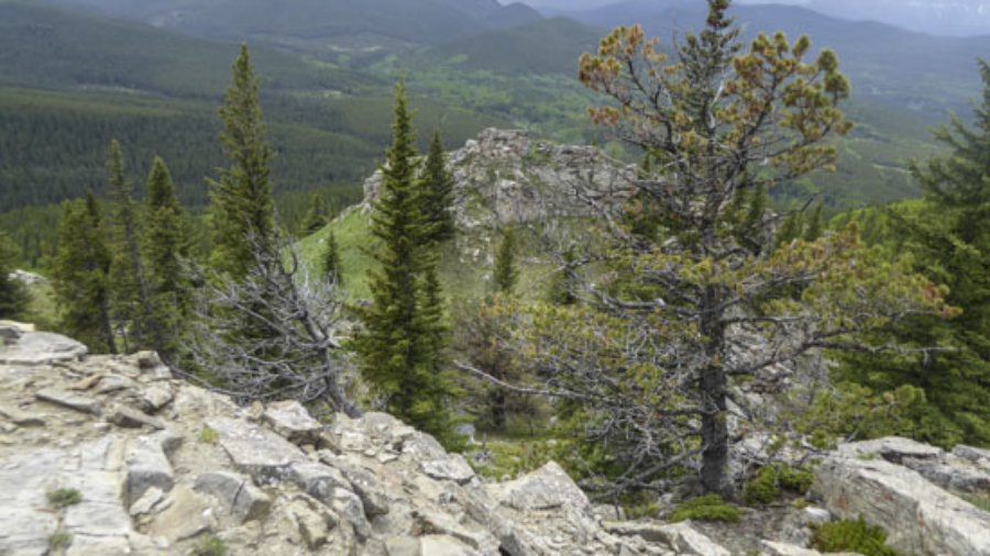 Green Mountain: A Different Approach Trail